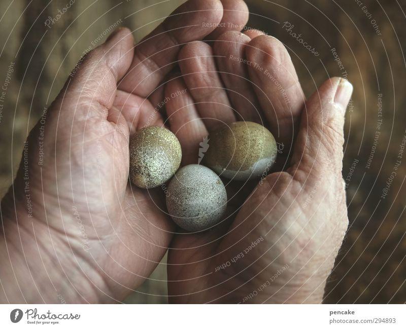 drei wünsche Mensch Frau Natur grün Hand Tier Erwachsene Wärme Leben Frühling feminin Gesundheit Glück grau Lebensmittel braun