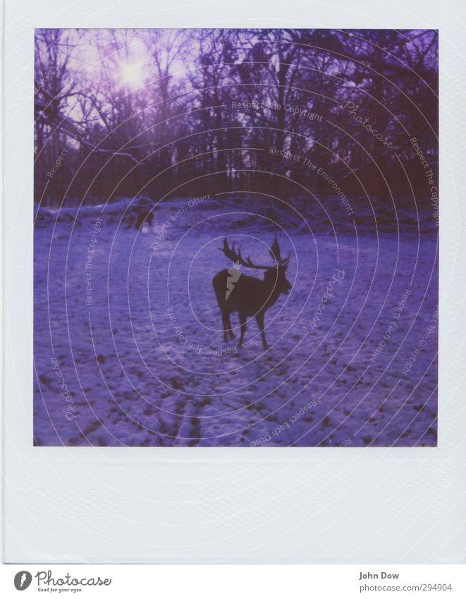 photographic deer-hunt Abenteuer Sonne Sonnenlicht Schnee Park Wald wild Natur Wandel & Veränderung Horn Sonnenstrahlen retro Fressen Nahrungssuche