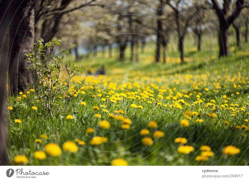 Wie lange noch? Natur schön Baum Blume Landschaft ruhig Erholung Umwelt Ferne Wiese Leben Gras Frühling Freiheit Gesundheit träumen