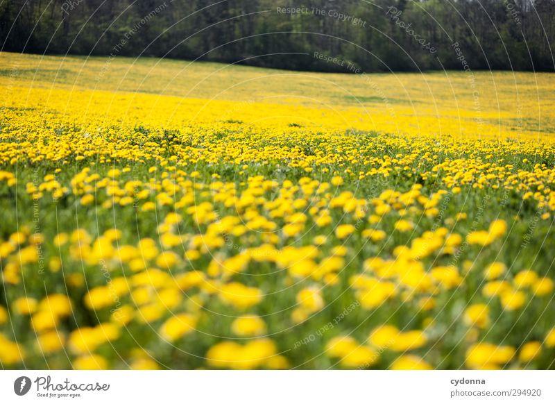 Gelbes Meer Natur schön Farbe Blume Landschaft ruhig Erholung Wald Umwelt gelb Ferne Wiese Leben Gras Frühling Freiheit