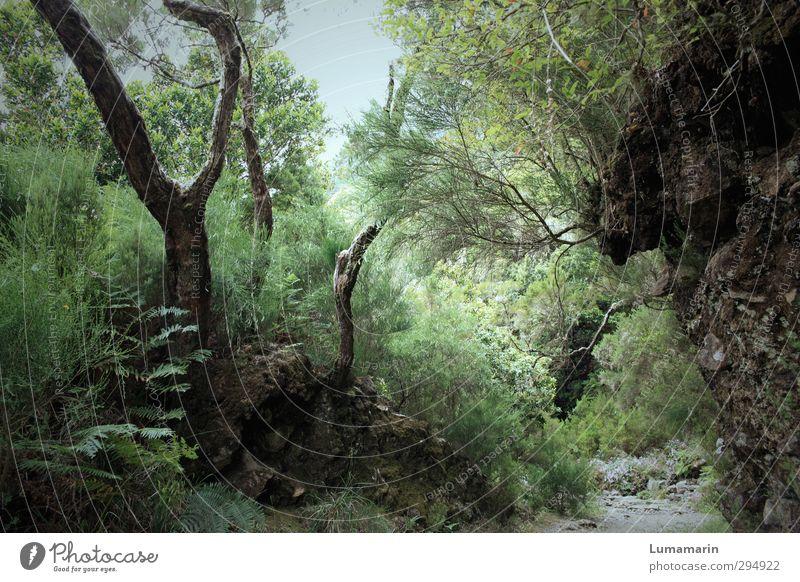 Wunderwald Umwelt Natur Landschaft Pflanze Wildpflanze Wald außergewöhnlich natürlich schön wild grün exotisch geheimnisvoll Idylle Leben träumen Wachstum