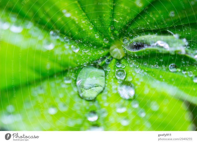 Wasserperlen Ausflug Sommer Umwelt Natur Landschaft Pflanze Tier Wassertropfen Frühling Herbst schlechtes Wetter Blatt Grünpflanze Garten Park Wiese elegant
