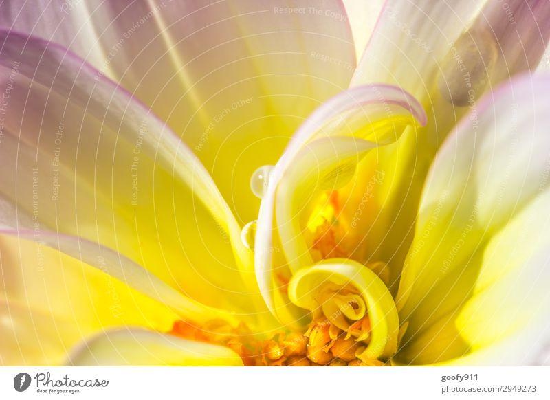 Tropfen im Blumeninneren Ausflug Umwelt Natur Pflanze Tier Wasser Wassertropfen Sonnenlicht Frühling Sommer Herbst Blüte exotisch Garten Park Wiese