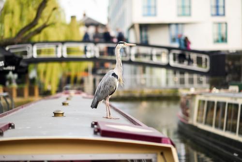 Ferien & Urlaub & Reisen Stadt Tier Herbst klein Tourismus Vogel Wasserfahrzeug wild Europa Feder Brücke Fluss Sightseeing Schnabel Großstadt