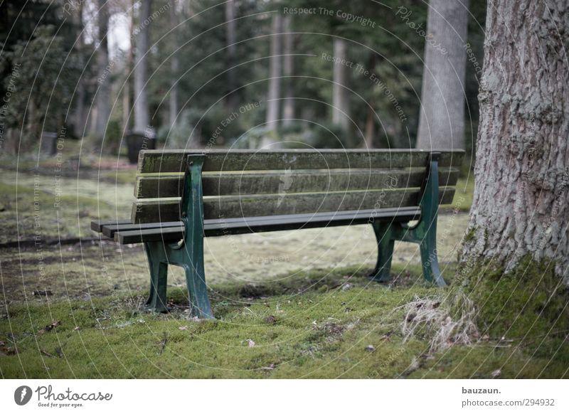 sitting. waiting. wishing. Natur alt grün Baum Landschaft Ferne Traurigkeit Wiese Gras Tod Holz grau Metall träumen Park Wetter