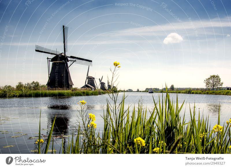 Windmühle in Holland Landschaft Wasser Himmel Sonnenlicht Frühling Flussufer Menschenleer ruhig Farbfoto Außenaufnahme Textfreiraum oben Tag Zentralperspektive