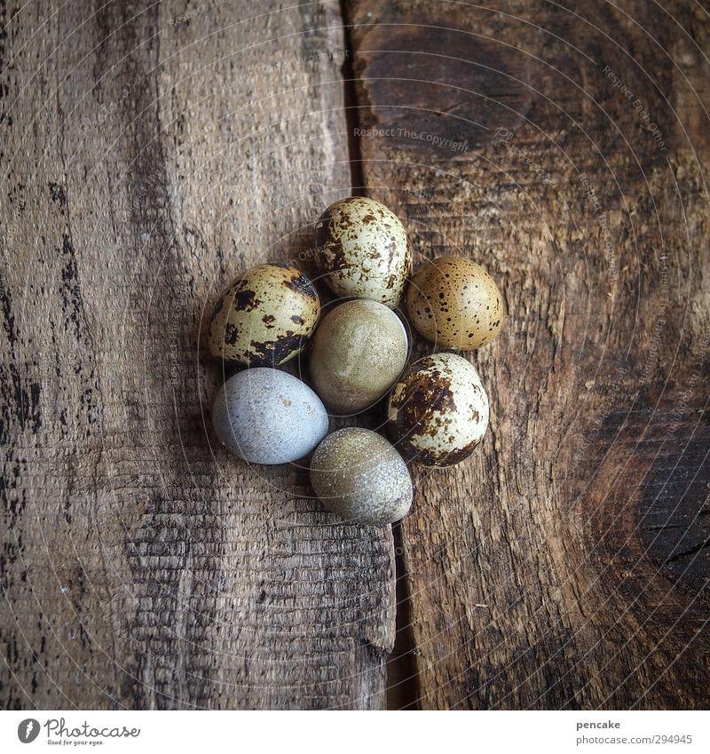 glückszahl Natur schön Tier Leben Frühling Holz Erde Kraft Erfolg Urelemente Zeichen Ostern geheimnisvoll Bioprodukte Ei Geborgenheit