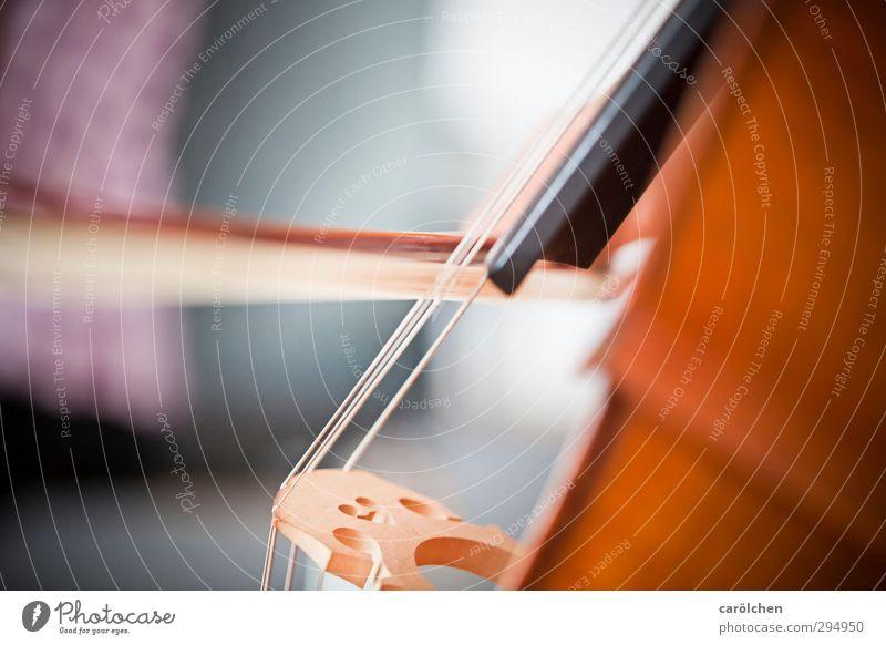 Musik Spielen Cello Kontrabass Streichinstrumente Bogen Saite Saiteninstrumente musizieren Musikinstrument Musikschule Musikunterricht Farbfoto Innenaufnahme