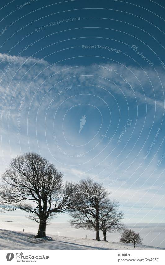 Ein Winter wie er früher einmal war! Himmel Natur blau Ferien & Urlaub & Reisen weiß Baum Landschaft Wolken Umwelt Berge u. Gebirge kalt Schnee hell natürlich