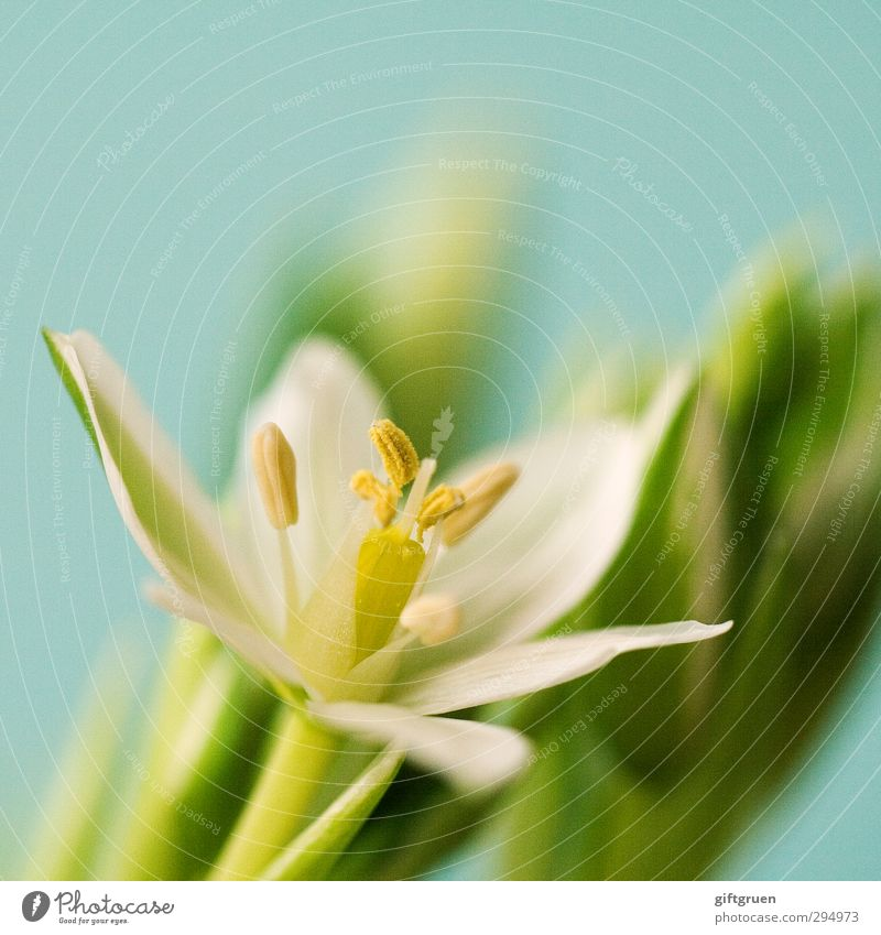 no winter lasts forever... Natur grün weiß Pflanze Blume Blatt Umwelt Frühling Blüte Wachstum Blühend Blütenknospen Blütenblatt Stempel Pollen zierlich