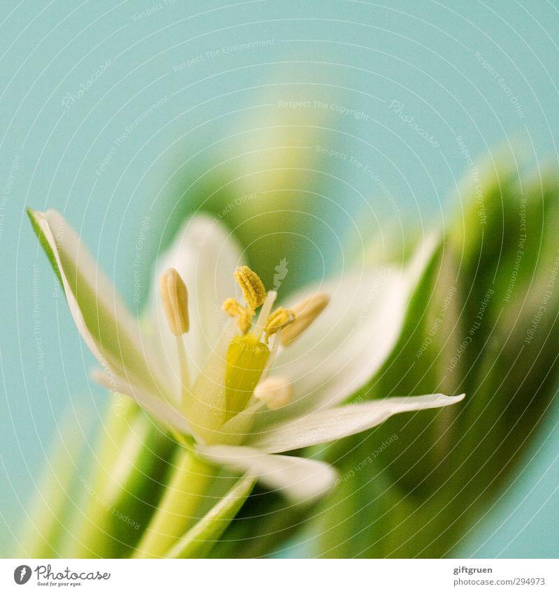 no winter lasts forever... Umwelt Natur Pflanze Blume Blatt Blüte Blühend Stempel Blütenblatt Blütenknospen Pollen Frühling Frühlingsblume Wachstum weiß grün