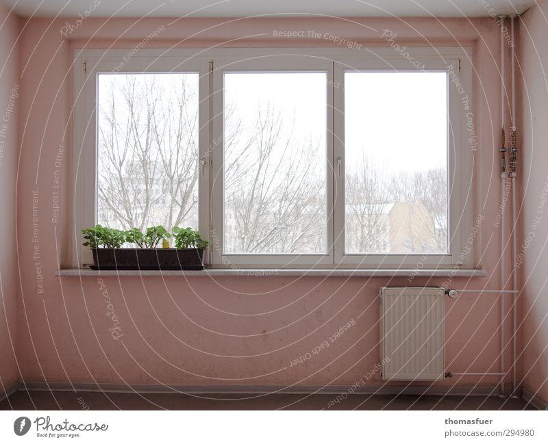 vergeblich Design Häusliches Leben Haus Renovieren Innenarchitektur Dekoration & Verzierung Fensterbrett Treppenhaus Architektur schlechtes Wetter Schnee