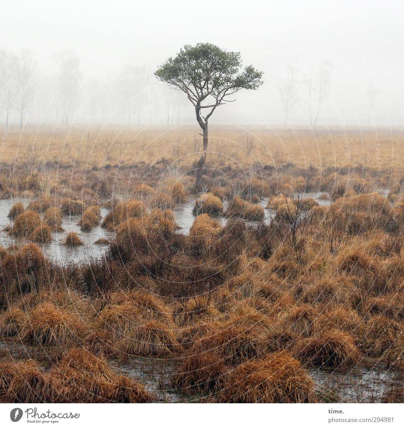Steppenwolf Umwelt Natur Landschaft Erde Wasser Himmel Nebel Baum Gras Sumpf Moor Zufriedenheit Verschwiegenheit friedlich Weisheit bescheiden Einsamkeit