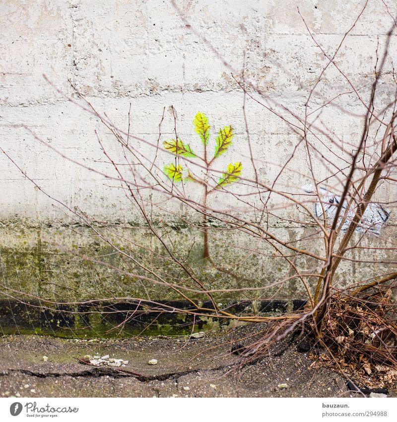ut köln | clouth | vorbildfunktion. Haus Garten Gartenarbeit Umwelt Natur Landschaft Pflanze Erde Baum Sträucher Grünpflanze Park Stadt Industrieanlage Fabrik