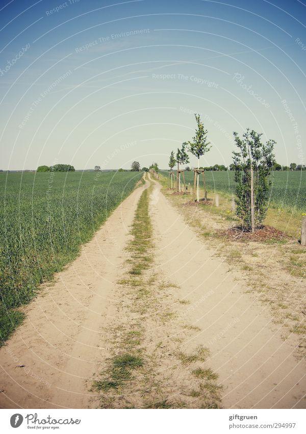 700 * long way to go Himmel Natur Sommer Pflanze Baum Sonne Landschaft Umwelt Straße Gras Wege & Pfade Horizont gehen Feld Erde Schönes Wetter