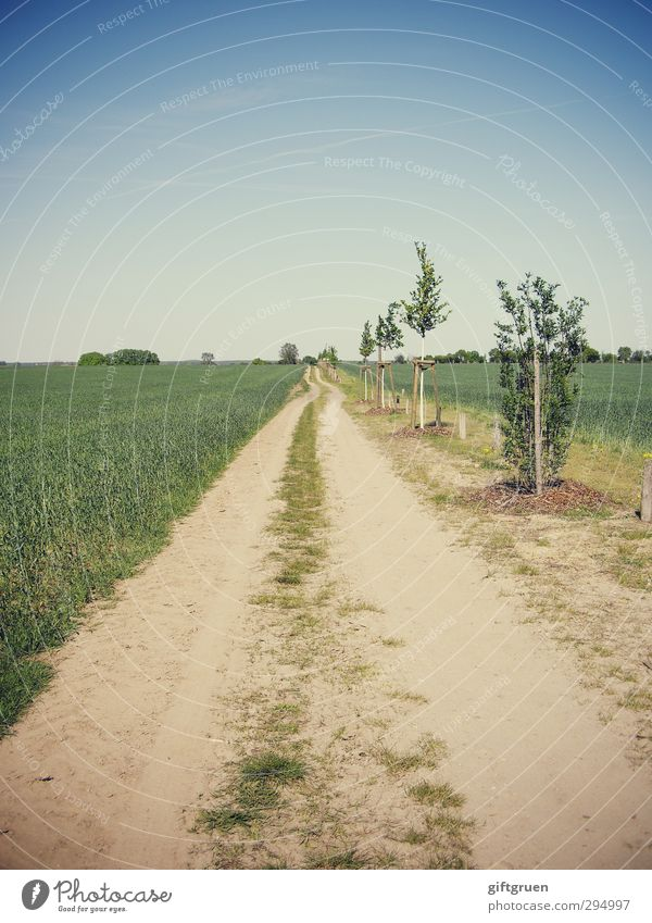 700 * long way to go Umwelt Natur Landschaft Urelemente Erde Himmel Wolkenloser Himmel Horizont Sonne Sommer Schönes Wetter Pflanze Baum Gras Nutzpflanze Feld