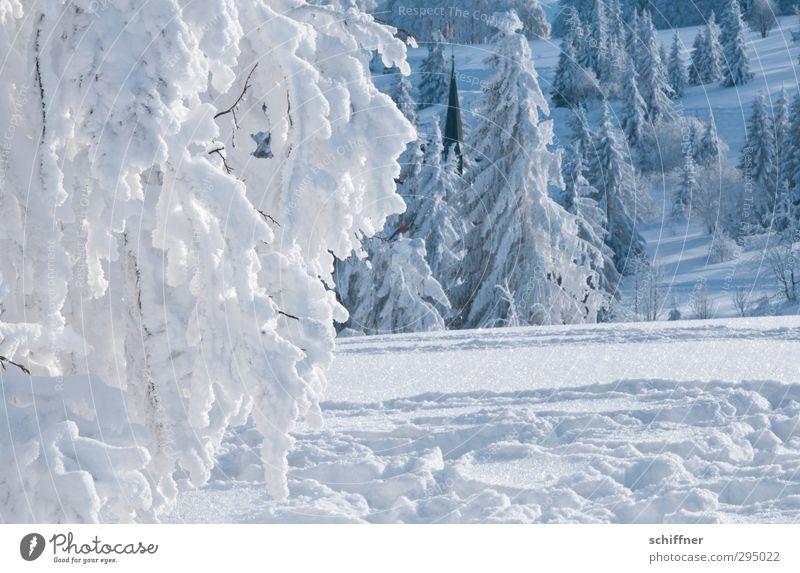 Suchbild Natur Landschaft Pflanze Winter Klima Schönes Wetter Eis Frost Schnee Baum Sträucher Wald kalt Schneelandschaft Schneedecke Kirchturmspitze Schwarzwald