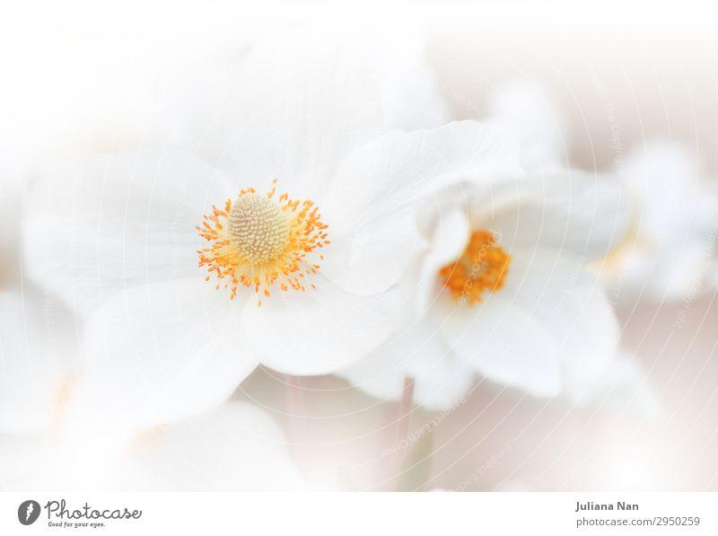 Natur Pflanze Farbe schön weiß Blume ruhig Hintergrundbild Lifestyle Stil Kunst orange Design Dekoration & Verzierung elegant ästhetisch