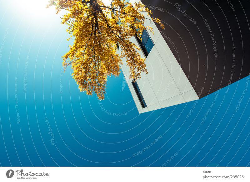 Eckhaus Arbeit & Erwerbstätigkeit Business Umwelt Himmel Wolkenloser Himmel Herbst Baum Stadt Haus Bauwerk Gebäude Architektur Fassade Fenster eckig einfach