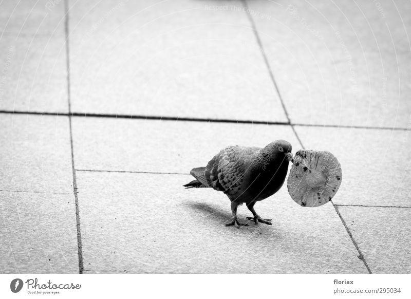 die taube & die muffinform Natur Stadt Tier Umwelt Spielen Gesunde Ernährung Essen Vogel Lebensmittel Wildtier Platz Beton Fitness berühren Spielzeug