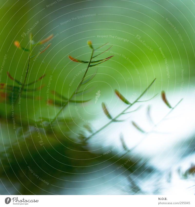 Zarte Auflösung Natur Pflanze Blatt verblüht ästhetisch grün Vertrauen Vergänglichkeit Zeit zart Farbfoto Innenaufnahme Menschenleer Textfreiraum oben