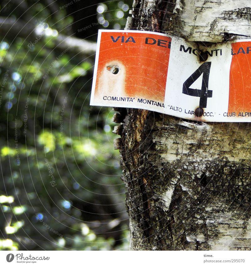via dei monti, la quarta Natur Pflanze Sommer Baum Wald Birke Birkenwald Birkenrinde Ziffern & Zahlen Schilder & Markierungen grün rot weiß Hilfsbereitschaft