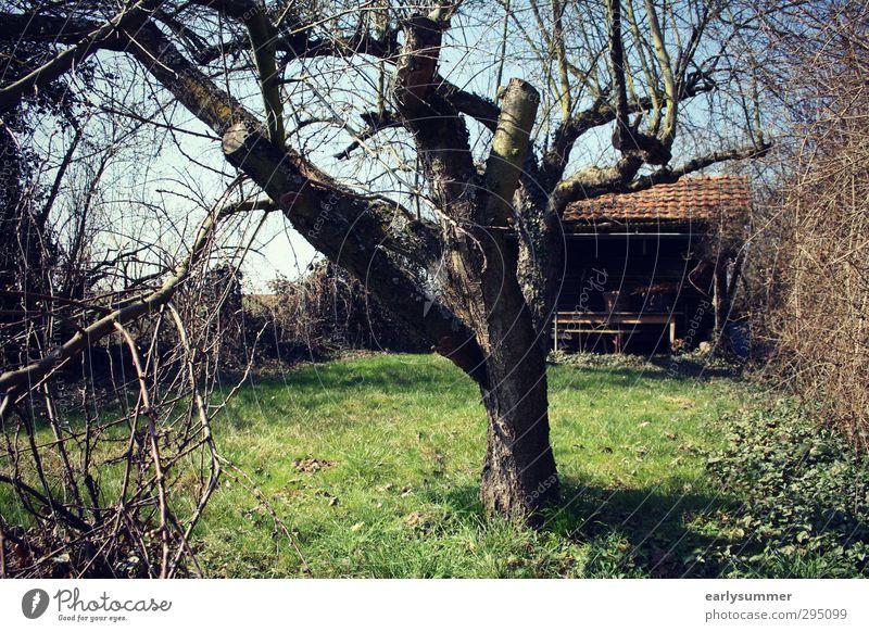 Frühling im Schrebergarten Himmel Natur grün Sommer Baum Erholung Umwelt Wiese Gras Holz Garten braun Freizeit & Hobby Idylle Sträucher