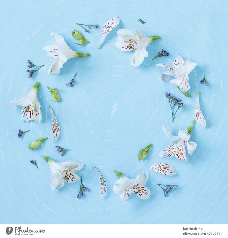 Blumen auf hellblauem Hintergrund Design Dekoration & Verzierung Hochzeit Frau Erwachsene Mutter oben rot Kreativität romantisch hell-blau flache Verlegung