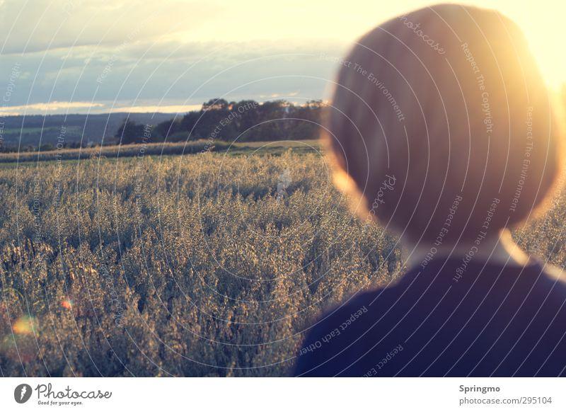 ausBLICK ruhig Natur Sonne Sonnenaufgang Sonnenuntergang Sonnenlicht Sommer Getreidefeld Feld entdecken Erholung Freundlichkeit Unendlichkeit gelb gold