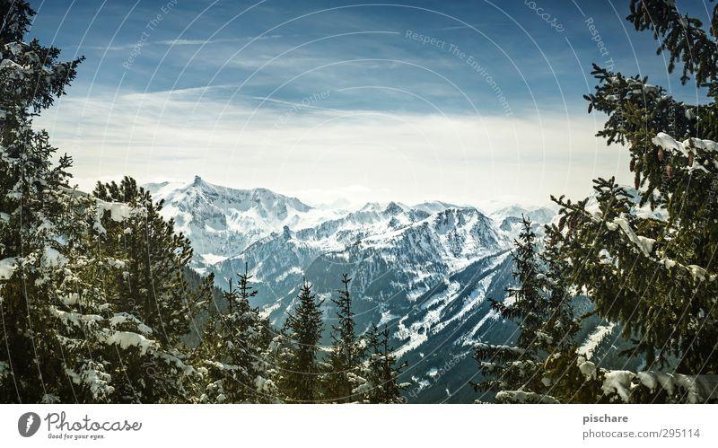 das wirklich letzte winterbild Himmel Natur Baum Landschaft Winter Berge u. Gebirge kalt Schnee Schönes Wetter Abenteuer Schneebedeckte Gipfel