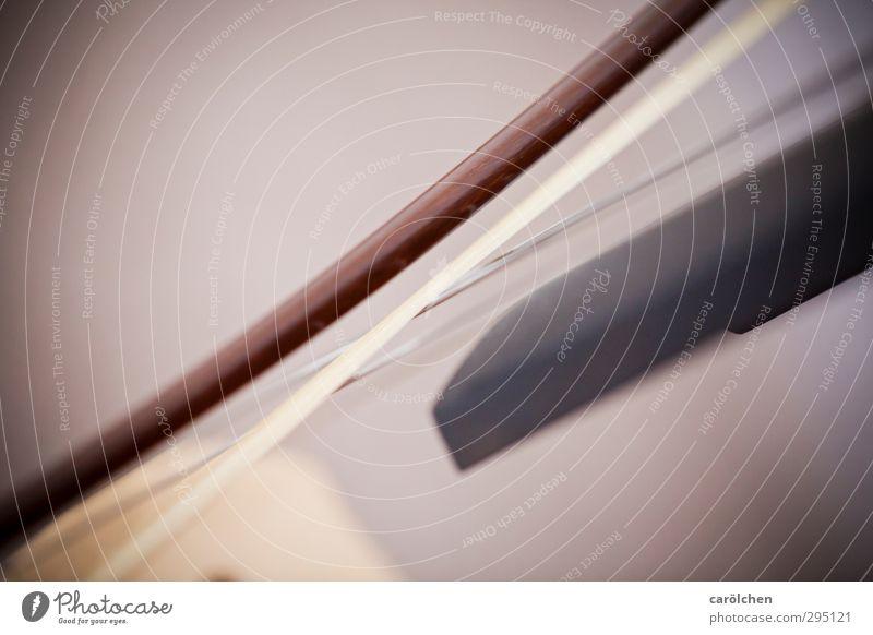 Musik braun Streichinstrumente Bogen Saite Saiteninstrumente Cellobogen Kontrabass Farbfoto Gedeckte Farben Detailaufnahme Makroaufnahme Textfreiraum links
