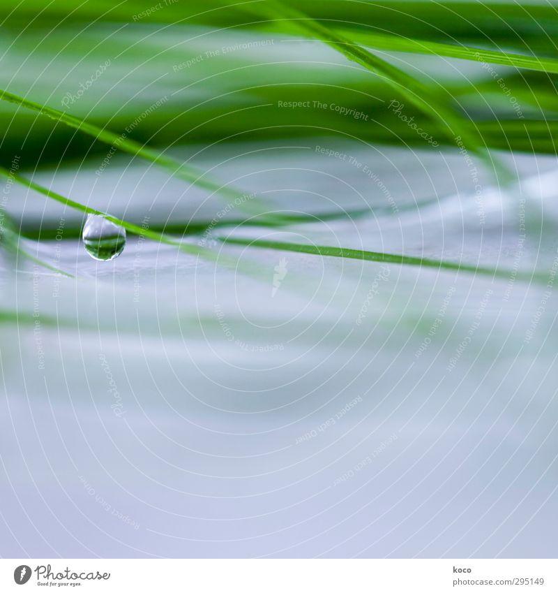 as tears go by Natur blau grün schön Wasser Sommer Pflanze Blatt kalt Leben Gras Frühling Traurigkeit natürlich träumen Linie