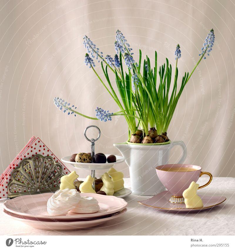 OsterStill II rot Frühling hell rosa Kaffee Ostern Süßwaren Geschirr Tasse Teller Schokolade Kannen Osterhase Osterei Topfpflanze Traubenhyazinthe