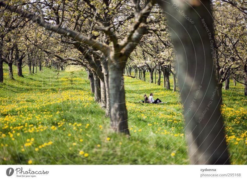 Frühling Mensch Natur Jugendliche Baum Blume Landschaft ruhig Erholung Erwachsene Umwelt Junger Mann Wiese Leben Freiheit 18-30 Jahre