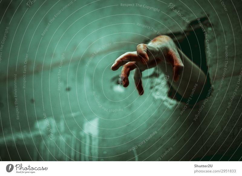 Zombiehand durch die zerbrochene Wand Design Halloween Mensch Frau Erwachsene Hand Finger Wut grün Kraft Tod Angst Entsetzen gefährlich Gewalt Leiche