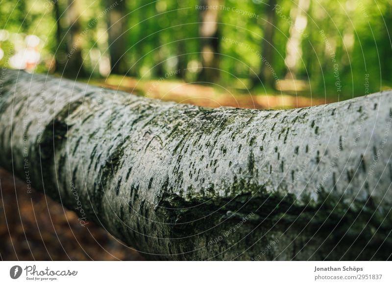 Baumstamm einer Birke liegend im Wald Natur Landschaft Pflanze Frühling Wachstum grün Mai Sachsen Sonnenstrahlen Birkenrinde weiß hell Umweltschutz Farbfoto