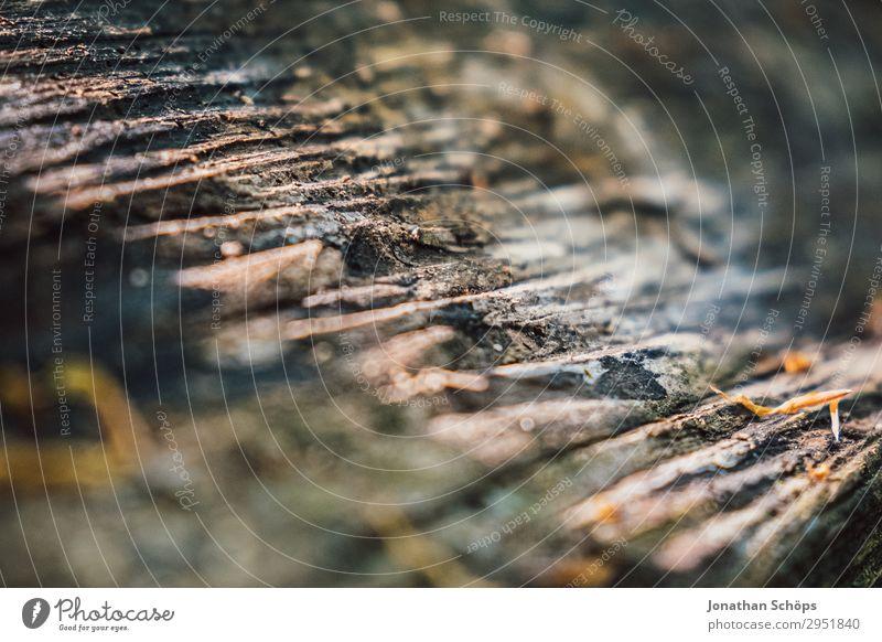 Baumstamm Textur Natur Landschaft Pflanze Frühling Wald Wachstum grün Mai Sachsen Strukturen & Formen Baumrinde Holz Hintergrundbild Farbfoto Außenaufnahme