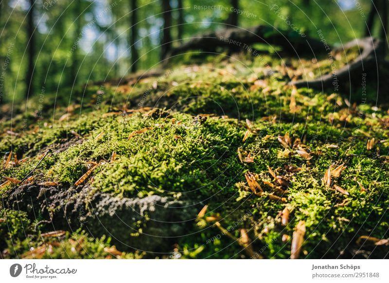Moos im Wald Nahaufnahme Natur Landschaft Pflanze Frühling Wachstum grün Mai Sachsen Moosteppich Waldboden bewachsen weich Sonnenstrahlen Farbfoto Außenaufnahme