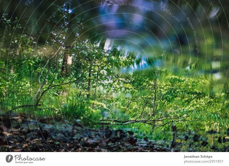 Reflexion des Waldes im Bach Natur Pflanze grün Wasser Landschaft Baum Frühling See Wachstum nass Teich Wasseroberfläche Sachsen Spiegelbild