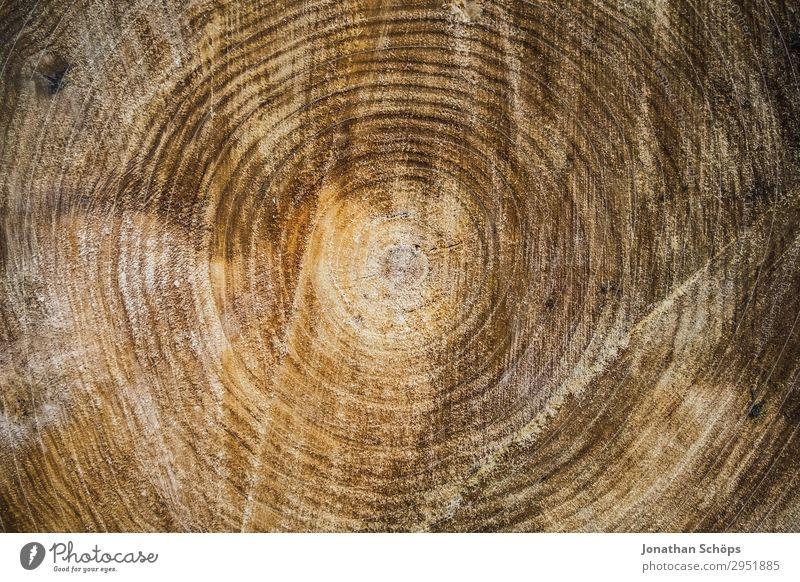 Textur Querschnitt eines Baumes Natur alt Pflanze Landschaft Wald Hintergrundbild Frühling braun Wachstum Kreis Baumstamm Mitte Umweltschutz Sachsen Lebensalter
