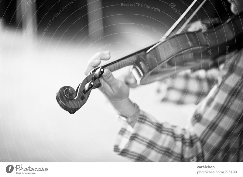 Musik Spielen Geige Streichinstrumente Hand greifen musizieren Musiker Musikinstrument Musikschule Musikunterricht Schwarzweißfoto Detailaufnahme