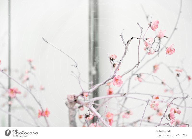 Frühlingserwachen Lifestyle Stil Leben harmonisch ruhig Häusliches Leben Wohnung Haus Traumhaus Gartenarbeit Kunst Natur Pflanze Sommer Blume Blüte Park