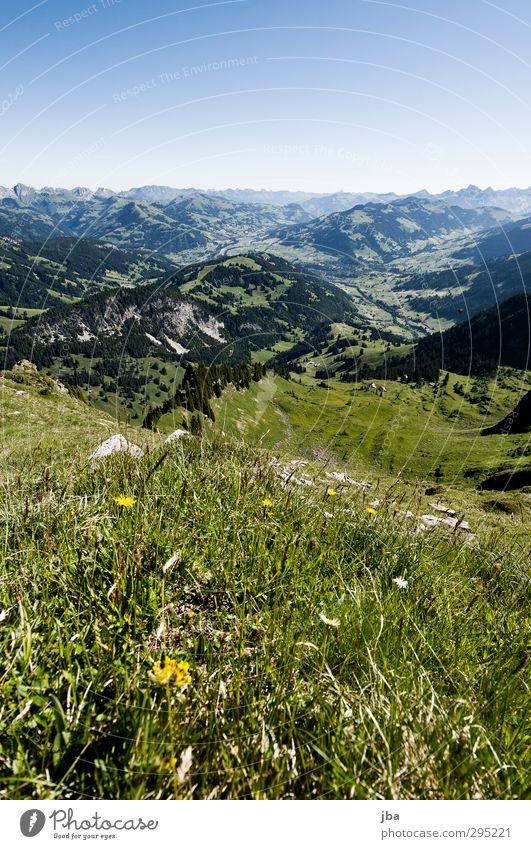 Berner Voralpen Sommer Pflanze Landschaft ruhig Erholung Wald Ferne Berge u. Gebirge Wiese Gras Horizont authentisch wandern Ausflug Alpen Aussicht