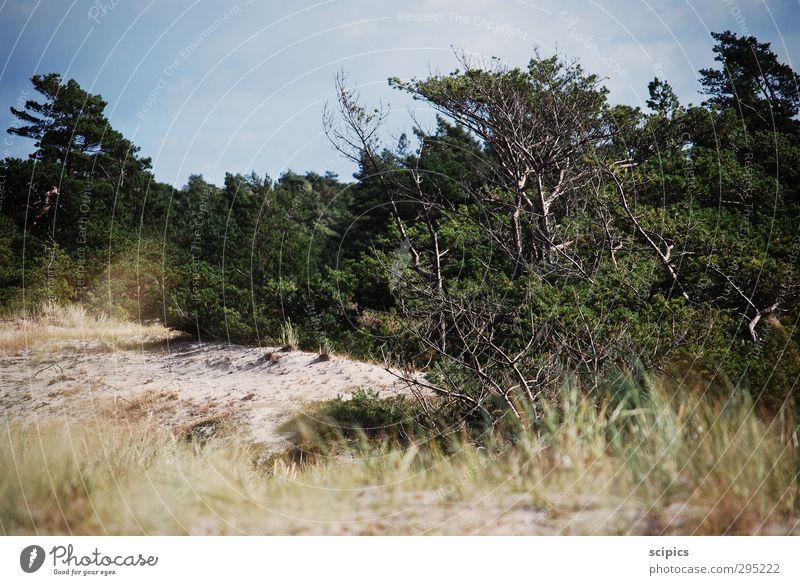 Düne Himmel Natur Ferien & Urlaub & Reisen Pflanze Sommer Sonne Erholung Meer Landschaft ruhig Wolken Tier Strand Umwelt Sand Energiewirtschaft