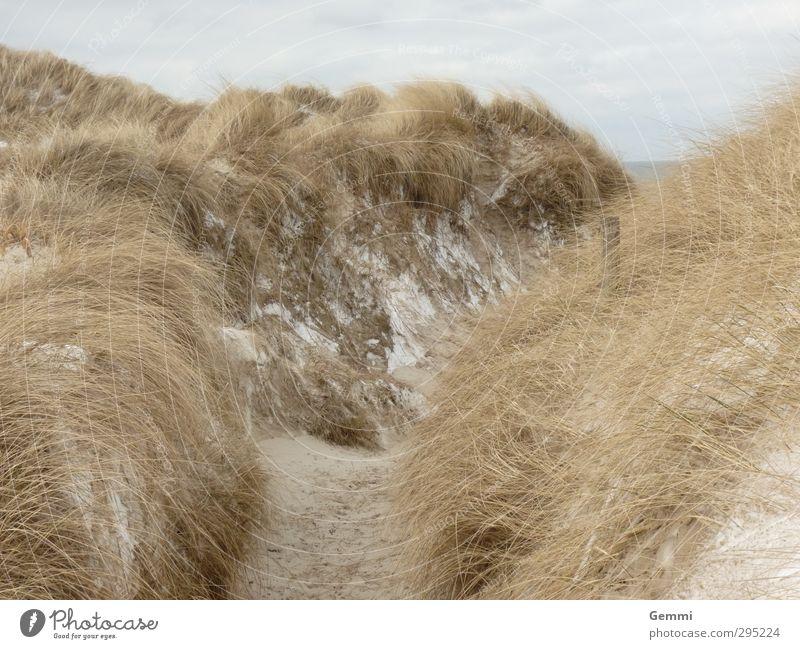 Dünenwinter Umwelt Natur Landschaft Pflanze Erde Sand Wolken Frühling Eis Frost Schnee Gras Strandhafer Küste Nordsee Insel Amrum Wege & Pfade Erholung braun