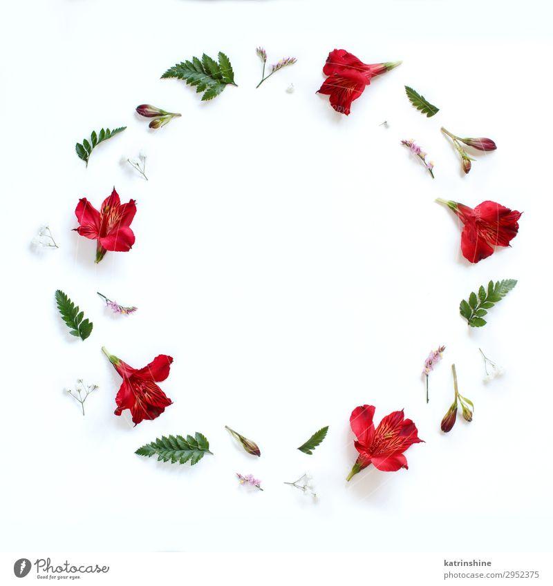 Frau weiß rot Blume Erwachsene Textfreiraum oben Design Dekoration & Verzierung Kreativität Hochzeit Mutter Entwurf geblümt Engagement