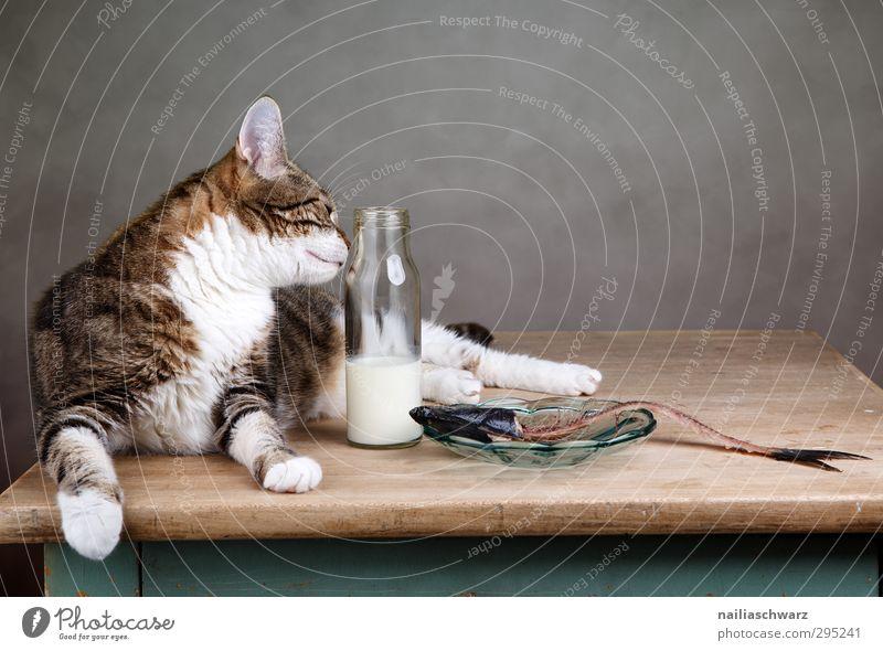 Mittagspause Lebensmittel Fisch Milch Teller Schalen & Schüsseln Flasche Tier Haustier Katze 1 Tisch Duft Erholung Essen füttern genießen dick Fröhlichkeit
