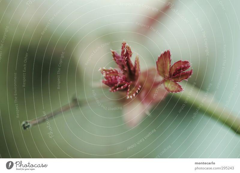 Frühling basteln..... Umwelt Natur Pflanze Baum Sträucher Blatt Grünpflanze Wildpflanze Blühend Wachstum dünn authentisch klein natürlich Spitze grün rot