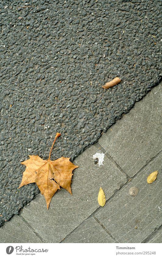 Arrangschemang. Blatt Straße liegen einfach gelb grau Stimmung Gelassenheit beobachten Kaugummi Vogelkot Linie Straßenbelag welk Asphalt Ahornblatt Farbfoto