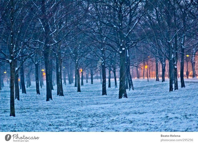 Jede/r hat seine guten Seiten ... Natur blau Baum Landschaft Erholung Wald gelb Schnee Beleuchtung Stimmung gehen Wetter authentisch leuchten Idylle